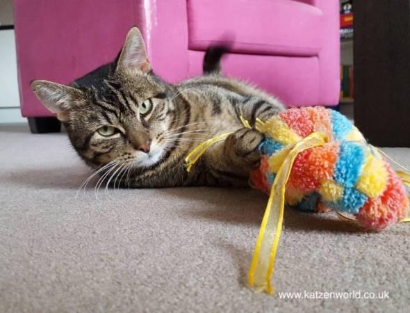 cat-candy-2