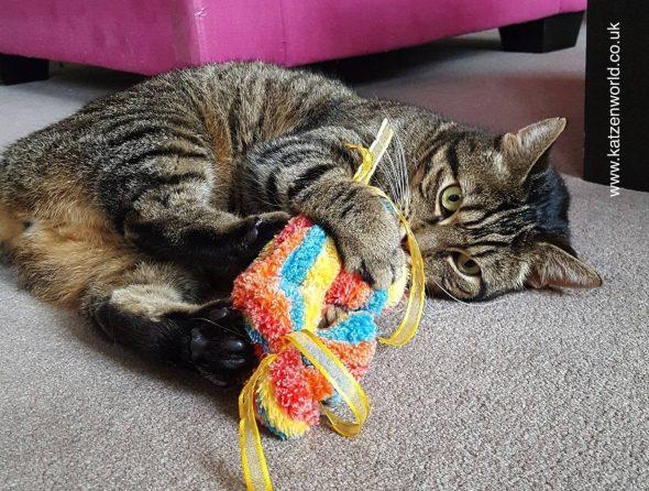 cat-candy-6