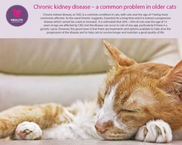 kidney2