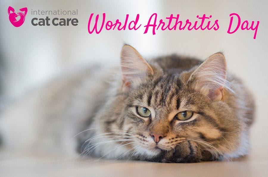 arthritis day 12 October